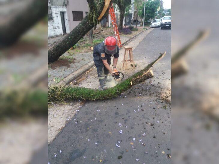 Bomberos de la Policía cortan y despejan árboles caídos de las casas en Posadas
