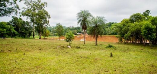 Eldorado: el Municipio realiza el mantenimiento de 160 espacios verdes en la ciudad