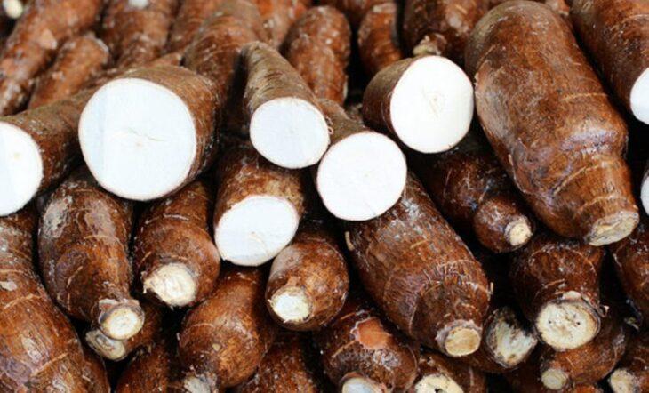 Producción récord: en San Pedro acopiaron más de un millón de kilos de mandioca