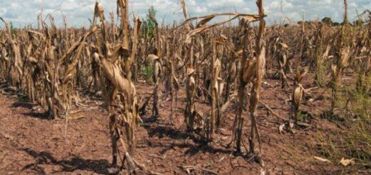 Continúa la sequía en Misiones y afecta a las producciones agropecuarias y ganaderas