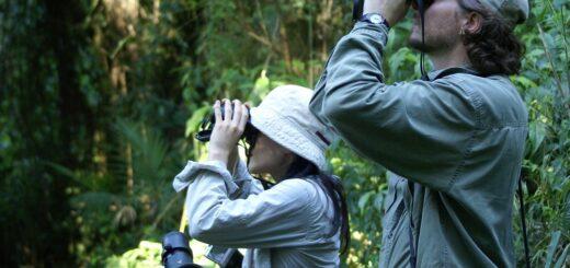 La Ruta Misionera de los Lodges: cinco episodios de selva para unir Salto Encantado, Moconá, Andresito, Cataratas y el Piray Miní