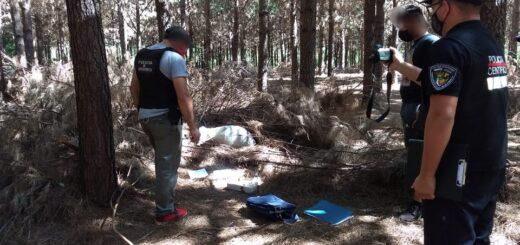Puerto Leoni: incautaron más de 19 kilos de cogollos de marihuana abandonados en un pinar de la Colonia La Otilia