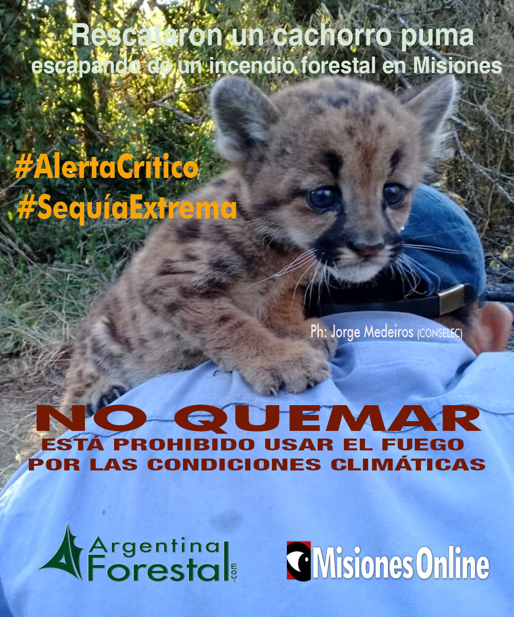 Yabotí: habría 340 hectáreas de bosques nativos afectadas por el incendio en el Lote 8 y 9 de la empresa forestal Juan Alberto SA