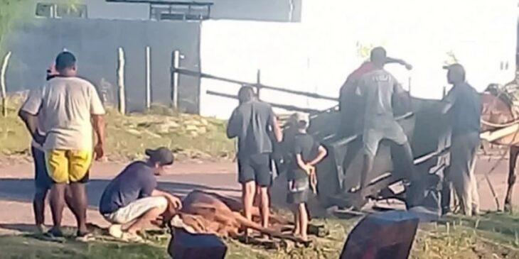 Un caballo murió en plena vía pública mientras tiraba de un carro en Corrientes