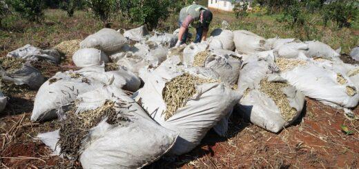 Controles del INYM, un duro golpe a quienes atentan contra la calidad de la yerba mate