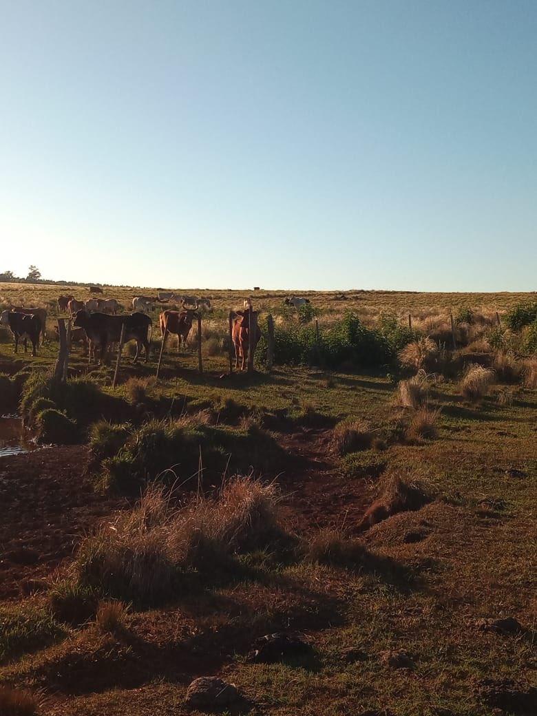 Sequía en Misiones: agropecuarios piden que la Provincia declare en emergencia al sector