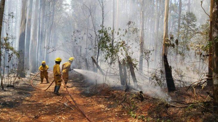 Productores y empresarios pidieron que se destinen fondos previstos en la tasa forestal a la emergencia por incendios