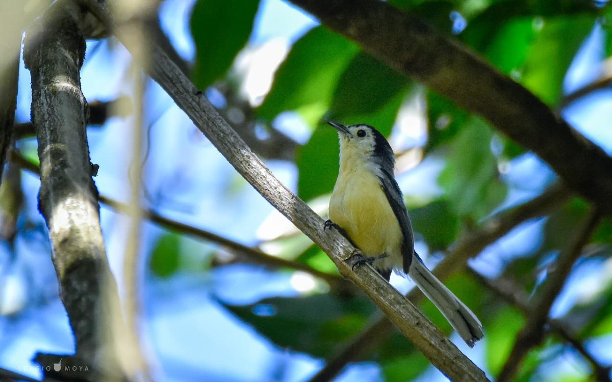 La Tacuarita blanca, una pequeñajoya de la Selva Misionera