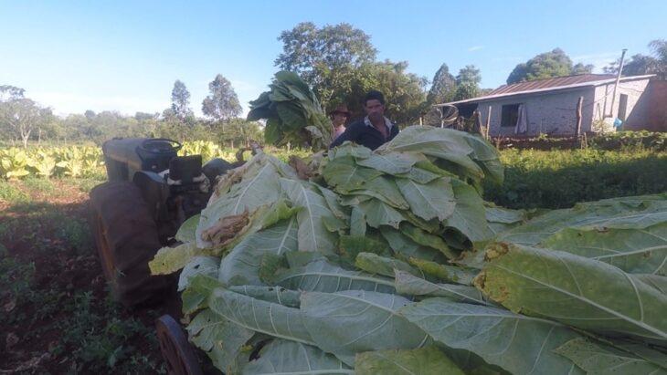 Advierten que de la mano de la brecha cambiaria volvió el interés por el contrabando de tabaco misionero a Brasil