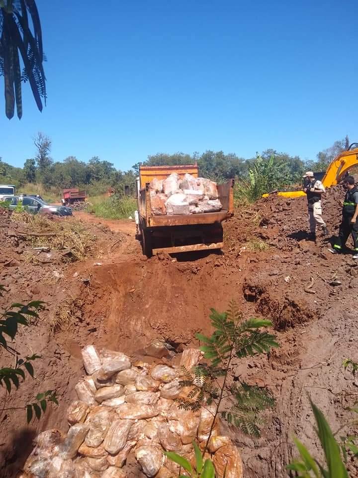 pollos desenterrados en puerto Iguazú