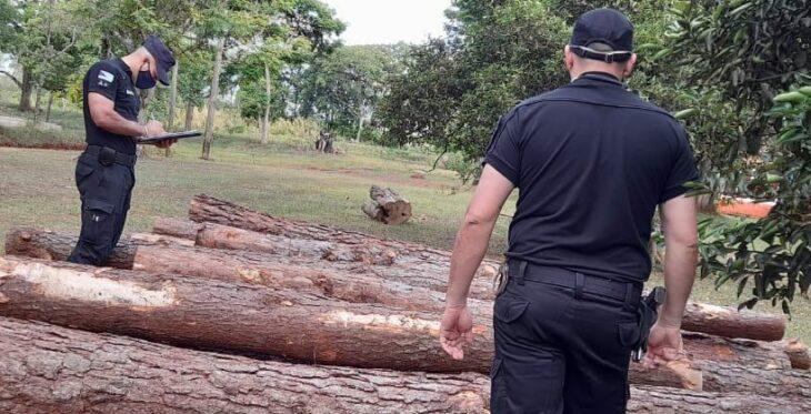 Policías incautaron rollos de pino talados ilegalmente en una propiedad privada de Campo Ramón
