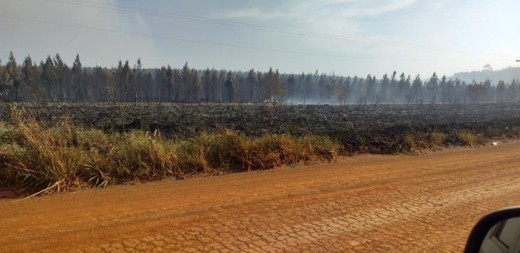 Virasoro: un incendio forestal recorrió 16 kilómetros y peligra uno de los establecimientos yerbateros más importantes de Corrientes