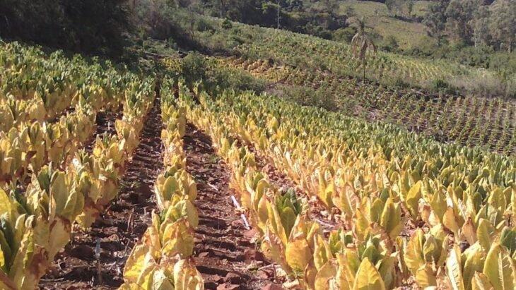 Caja verde: entidades tabacaleras aclaran que adelantar recursos del FET del año próximo reducirá los fondos para cobertura de contingencias climáticas