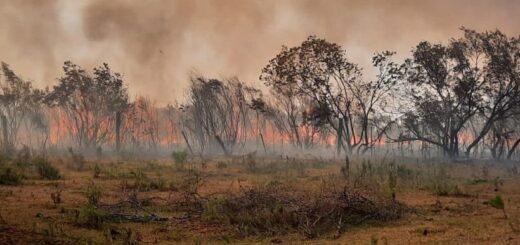 El Gobierno de Misiones identificó y denunció a los responsables de iniciar los incendios en Yabotí