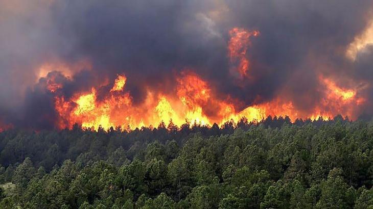 El IMiBio advierte que  los incendios en Misiones se podrían perder de forma irreparable al menos 25 especies animales y vegetales
