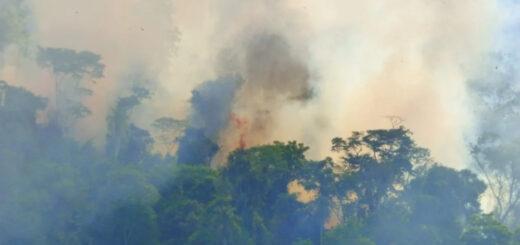 Incendios en Misiones: en las últimas horas se reavivó el fuego en la Reserva Yabotí y la situación volvió a complicarse