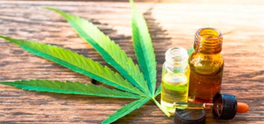 ¿Qué cambios trae la regularización del autocultivo de cannabis?