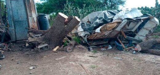 una mujer y su hija de 6 años murieron aplastadas por un árbol