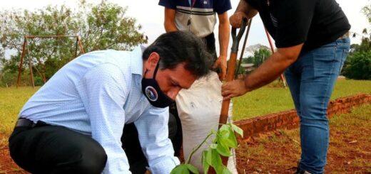 Proponen introducir a la educación ambiental como materia en las escuelas misioneras