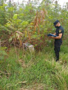 Incautaron más de 70 kilogramos de marihuana a orillas del Río Paraná en Posadas