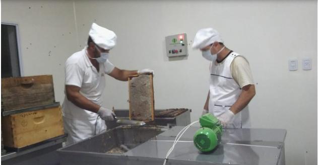 Productores de miel iniciarán formalmente hoy su cosecha en una sala de extracción propia en 25 de Mayo