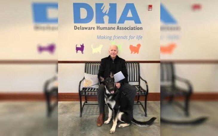 Joe Biden rescató a un perro: conocé la historia de Major, el primer animal callejero que vivirá en la Casa Blanca