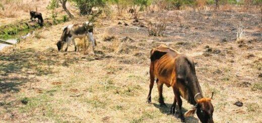 La sequía continúa y preocupa a los productores misioneros