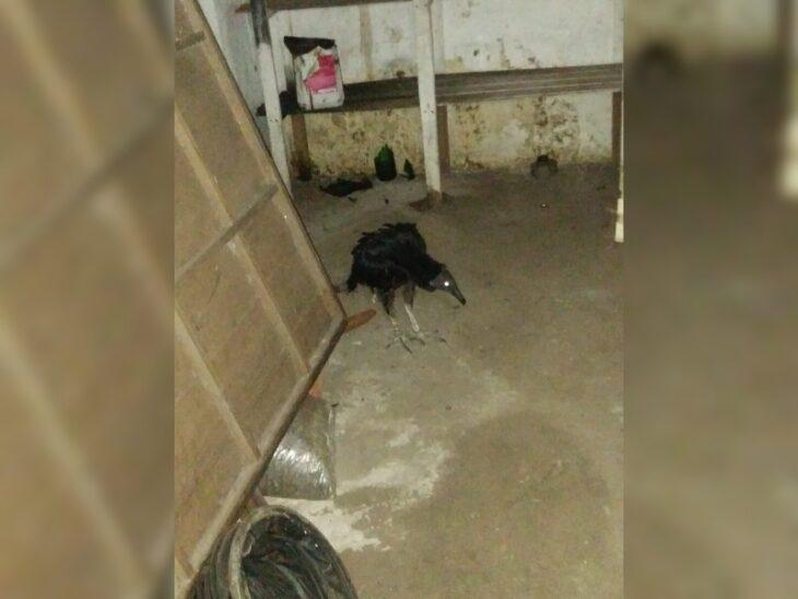 Encontraron y rescataron a un ave silvestre en un bar posadeño