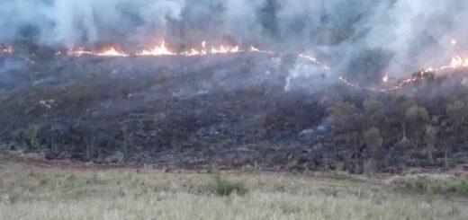 San Ignacio: el incendio en zona del arroyo Yabebirí consumió un pinar y provocó importantes pérdidas