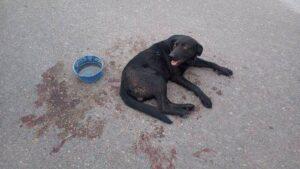 Una mujer encadenó a su perro al auto y lo arrastró durante siete cuadras hasta que la denunciaron por maltrato