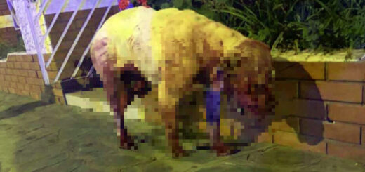 torturó y mató a su perro