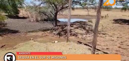 La sequía prolongada afecta gravemente al suelo y al ganado en la zona sur de Misiones