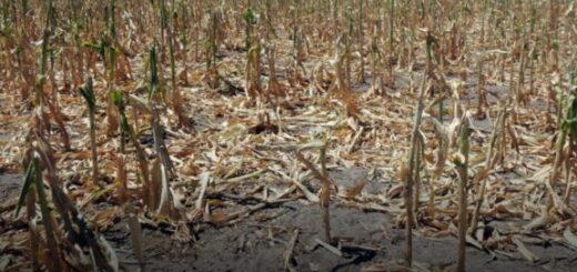 La falta de lluvia alarma y afecta a la producción en Misiones