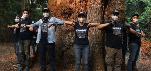 Colosos de la Tierra 2020: premiaron la conservación de seis árboles gigantes, entre casi 600 participantes del mayor concurso ambiental de Paraguay