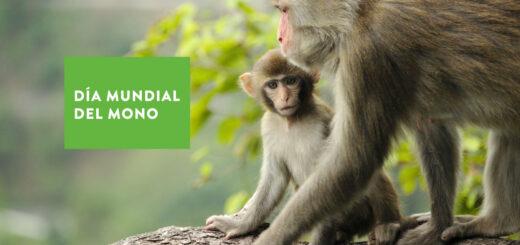 Día Mundial del Mono