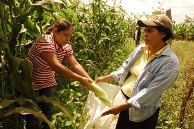 Mujeres rurales de Misiones abren paso a la comercialización de sus productos