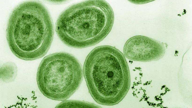 bacteria potencialmente tóxica en el río