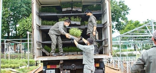 Biofábrica Misiones proveerá 500 mil algarrobos a Córdoba para restaurar áreas incendiadas