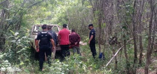 Eldorado: atraparon a tres hombres que se encontraban robando yerba mate de una propiedad privada