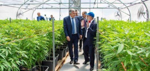 Jujuy es la primera provincia argentina en producir aceite de cannabis para uso medicinal