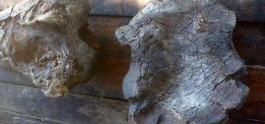 Un grupo de pescadores encontraron fósiles de un perezoso gigante en el río Paraná