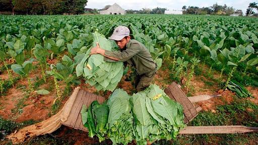 Los productores del sector tabacalero recibieron hoy el pago de Caja Verde gestionada por el Gobierno Provincial