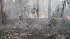 Santa Fe, Entre Ríos, Santa Cruz y La Pampa registran focos de incendios forestales activos