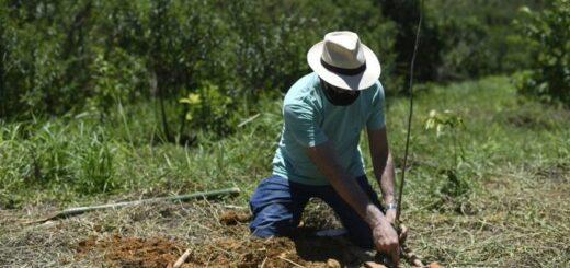 Bosques da Memória, un proyecto que busca reforestar áreas de Brasil y rendir homenaje a las víctimas de la pandemia
