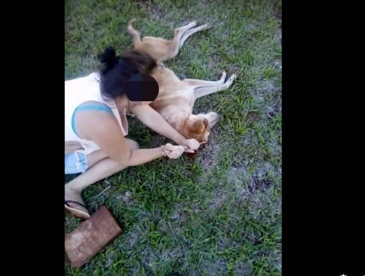 Aberrante caso de maltrato animal en Misiones: dos menores de edad le sacaron los ojos a un perro y lo filmaron