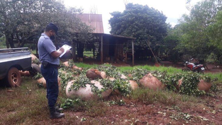 Otros 6000 kilos de yerba mate fueron recuperados en Puerto Leoni y en Eldorado