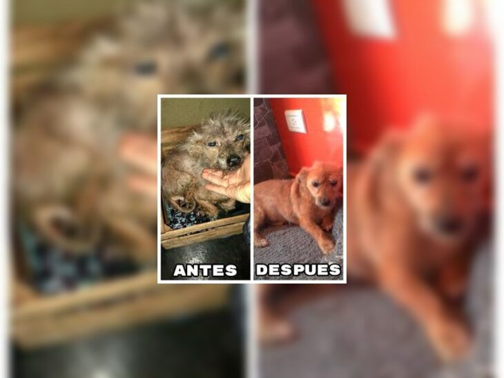 """La organización """"Esperanza Animal"""" se declaró en quiebra y pide ayuda a la comunidad para salir a flote"""