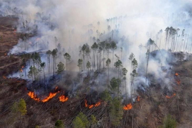 Después de meses, hoy no se registran focos activos de incendios forestales en el país