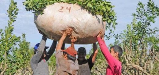 Piden eliminar la incompatibilidad del registro formal con los planes sociales de trabajadores rurales