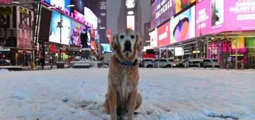 nevada azota Nueva York